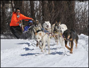 Dog Sled Action - New Hampshire's Grand North