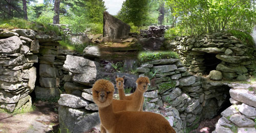 Composite with Alpacas 500x250 - America's Stonehenge - Salem, NH
