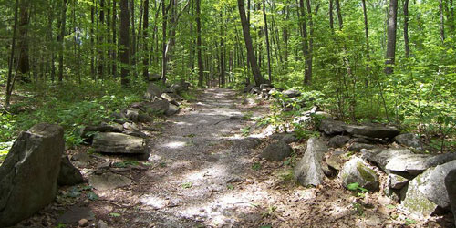 Hiking Trail 500x250 - America's Stonehenge - Salem, NH