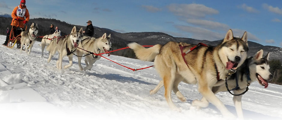 Dog sledding in New Hampshire