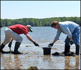 Shellfishing and clamming on New Hampshire Sea coast on Great Bay and Piscataqua rivers